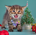 Small kitten among christmas stuff cute little wearing a jingle bells necklace handmade beads fur tree balls and presents studio Stock Images