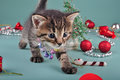 Small kitten among christmas stuff cute little wearing a jingle bells necklace handmade beads fur tree balls and presents studio Stock Photography