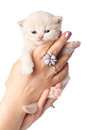 Small kitten on a hand Royalty Free Stock Photo