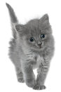 Small kitten isolated on white background Stock Images
