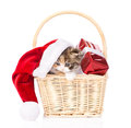 Small kitten with red hat and gift in basket on white Royalty Free Stock Photo
