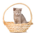 Small kitten sitting in basket. isolated on white background Royalty Free Stock Photo