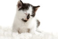 Small kitten sleeping Stock Images