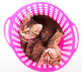Small kittens in a basket group of Stock Photo