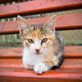 Small Kitty on the bench Royalty Free Stock Photo