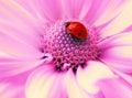 Small ladybug Royalty Free Stock Photo