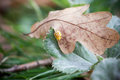 Small ladybug on autumn leaf