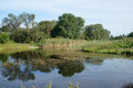 Small lake, reeds, trees, blue sky, calm on a summer day Royalty Free Stock Photo