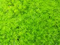 Small light green color of plant leaves on the floor for background and texture. Royalty Free Stock Photo