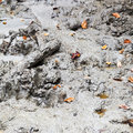 Small mud volcano solontsy in caucasus mountains Royalty Free Stock Photography