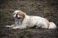 Small Muddy Dog on Beach