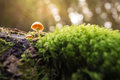 Small mushroom in moss in forest Royalty Free Stock Photo