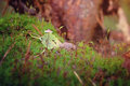Small mushroom in moss wet strong closeup Royalty Free Stock Photo