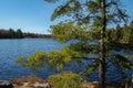 Small Muskoka Lake Royalty Free Stock Photo