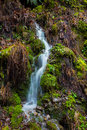 Small natural waterfall cascade cascading on a hillside in oregon Royalty Free Stock Photo