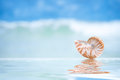 Small nautilus shell and reflection with ocean wave and seasca seascape shallow dof Stock Images