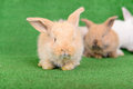 Small newborn rabbits on a green background Stock Images