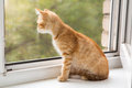 Small orange kitten lays on the window sill and look in Royalty Free Stock Photos