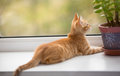 Small orange kitten look in the window lays on sill and Royalty Free Stock Photos