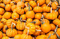 Small Orange Pumpkin Pile Royalty Free Stock Photo