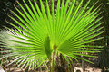 Small palm tree Royalty Free Stock Photo