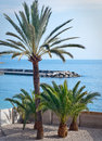 Small palm trees in french riviera Stock Photos