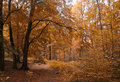 Small path in Autumn forest Royalty Free Stock Photos