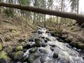 Small picturesque forest river day shot Royalty Free Stock Photo