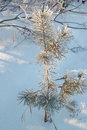 Small pine tree in winter forest Royalty Free Stock Photography