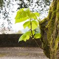 Small plant born from a tree trunk - New life concept image Royalty Free Stock Photo