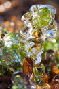 Small plant covered in ice a spring storm covers plants Stock Photography