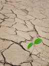 Small plant in cracked earth Stock Photos