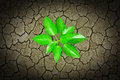 Small plant growing from  cracked earth Royalty Free Stock Images