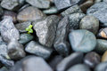 Small Plant Grows Through Big Rocks Royalty Free Stock Photo