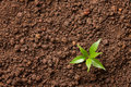 Small plant grows on soil with copy space Stock Image