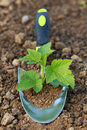 Small plant on a planting trowel in a garden is growing soil Royalty Free Stock Photo