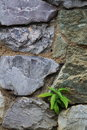 Small Plant and rock Royalty Free Stock Photo