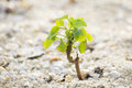 Small plant on sand new sprout Stock Images