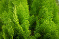 Small plants background nature texture Royalty Free Stock Images