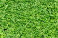 Small plants background nature texture Royalty Free Stock Image