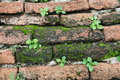 Small plants growing on a wall Royalty Free Stock Photo