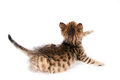 Small playful kitten back tabby behind Royalty Free Stock Images
