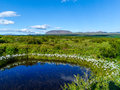 Small pond near thingvallavatn lake in iceland photo taken july of þingvallavatn icelandic the largest Royalty Free Stock Image