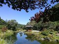 Small pond with relection of pavilion in Korean style garden Royalty Free Stock Photo