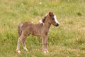 Small pony Royalty Free Stock Photo