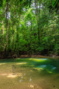 Small pool in a tropical rainforest Royalty Free Stock Photo