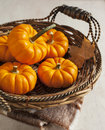 Small pumpkins in the basket fresh Royalty Free Stock Image