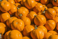 Small pumpkins are in a box in a ranch market Stock Photography