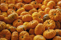 Small pumpkins a bunch of on a farm in a bin Royalty Free Stock Photos