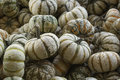 Small pumpkins a bunch of on a farm in a bin Royalty Free Stock Images